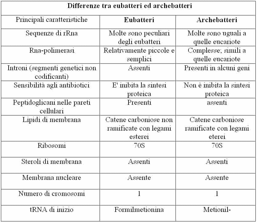 differenze tra batteri funghi e tabella dei virus