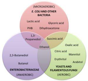classi di molecole ad alto valore commerciale prodotte in processi di bioraffineria