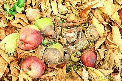I frutti fermentati hanno consentito un rafforzamento del sistema immunitario degli ominidi.