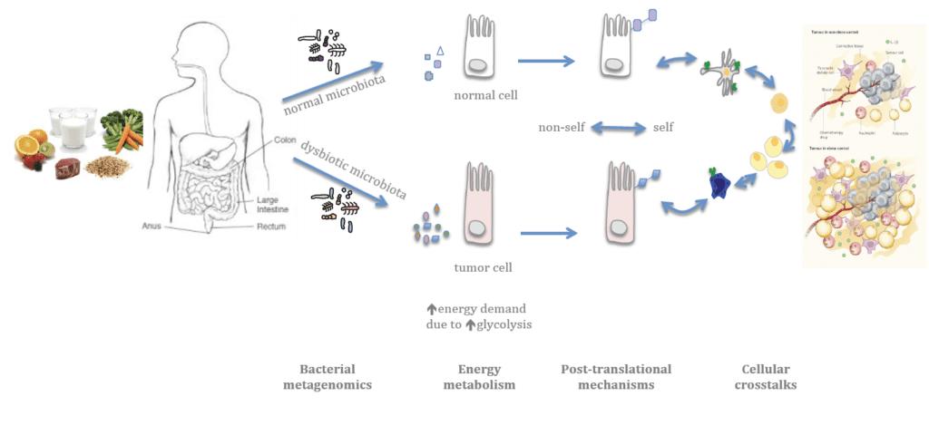 Microbiota e la prevenzione al tumore al seno