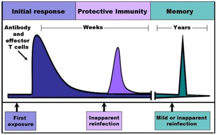 esposizione agenti esogeni costituisce memoria immunitaria