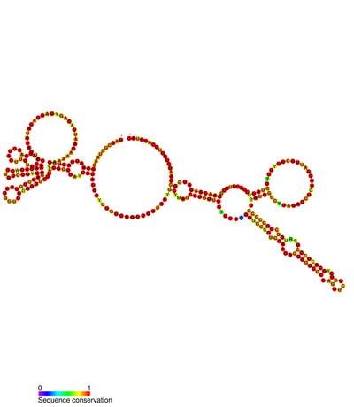 struttura del virus del sarcoma di Rous