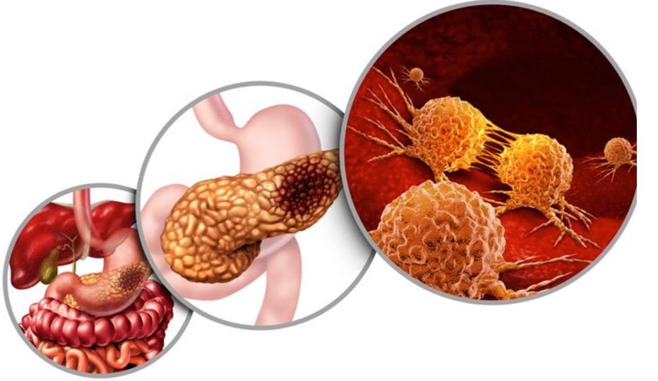 Connessione tra intestino e pancreas