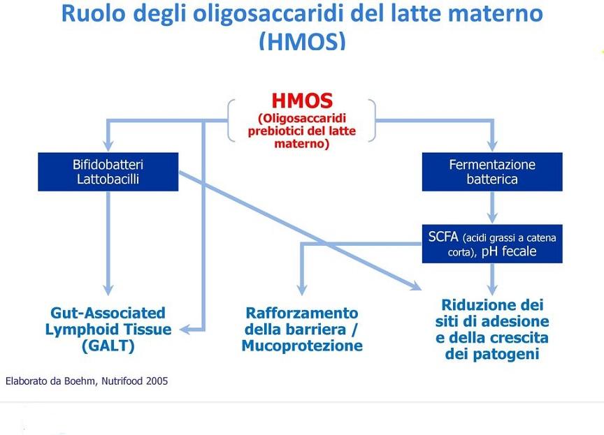 Gli HMO (oligosaccaridi del latte materno) svolgono svariate funzioni utili per favorire il benessere del lattante grazie alla promozione della crescita di specie microbiche utili.