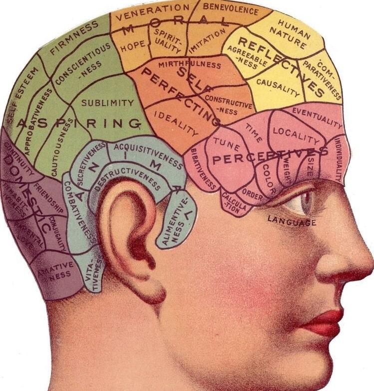"""Frenologia. Nel 1800 era di moda la """"frenologia"""", ovvero l'idea che le singole funzioni mentali complesse come il ragionamento, la memoria, l'istinto, la percezione e l'intelligenza, dipendessero da specifiche aree del cervello. Secondo questa disciplina, era quindi possibile indovinare le capacità psichiche di un soggetto andando ad esaminarne solo determinate caratteristiche morfologiche della testa. Ad oggi questa scuola di pensiero è stata completamente abbandonata: difatti è stato dimostrato che le attività cerebrali si realizzano in maniera diffusa e che per ognuna di esse sono coinvolti diversi substrati cerebrali."""