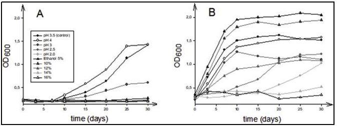 """Profilo di crescita di diversi isolati appartenenti al genere """"Brettanomyces"""" in terreni liquidi con contenuto di pH o etanolo distinto."""