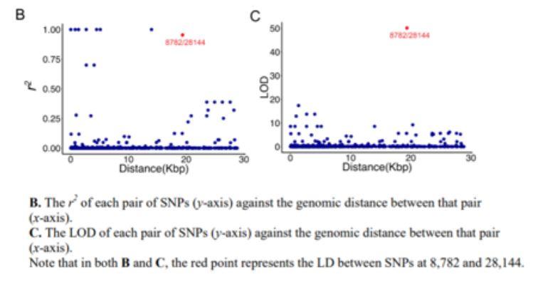 distanza genomica tra i due SNPs