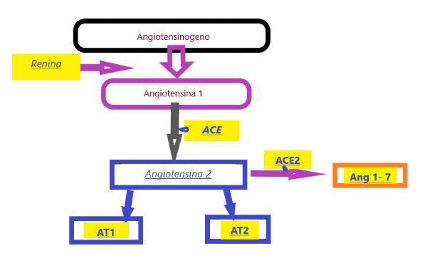 sistema omeostatico della Renina – Angiotensina