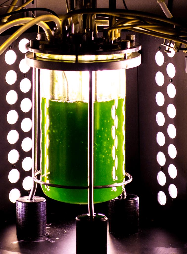 Fotobioreattore per mixotrofia di microalghe