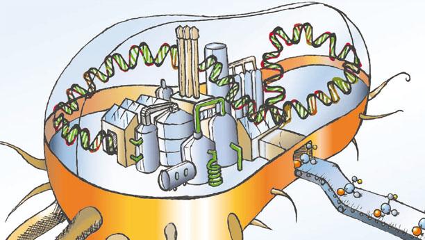 Fabbrica microbica