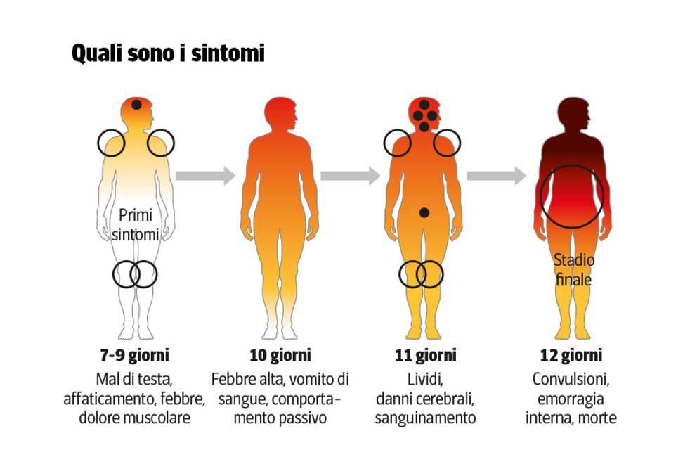 Sintomatologia EVD