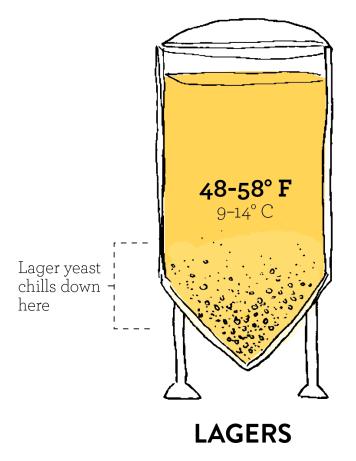 Bassa fermentazione nelle birre in stile lager