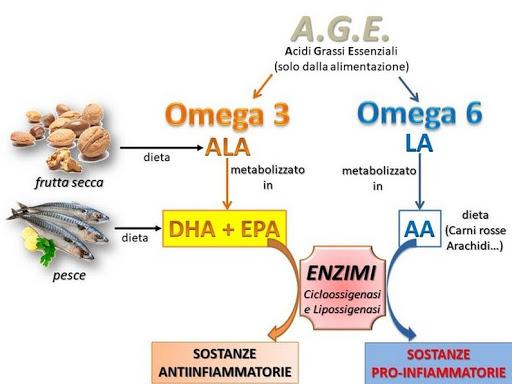 omega 3 e omega 6