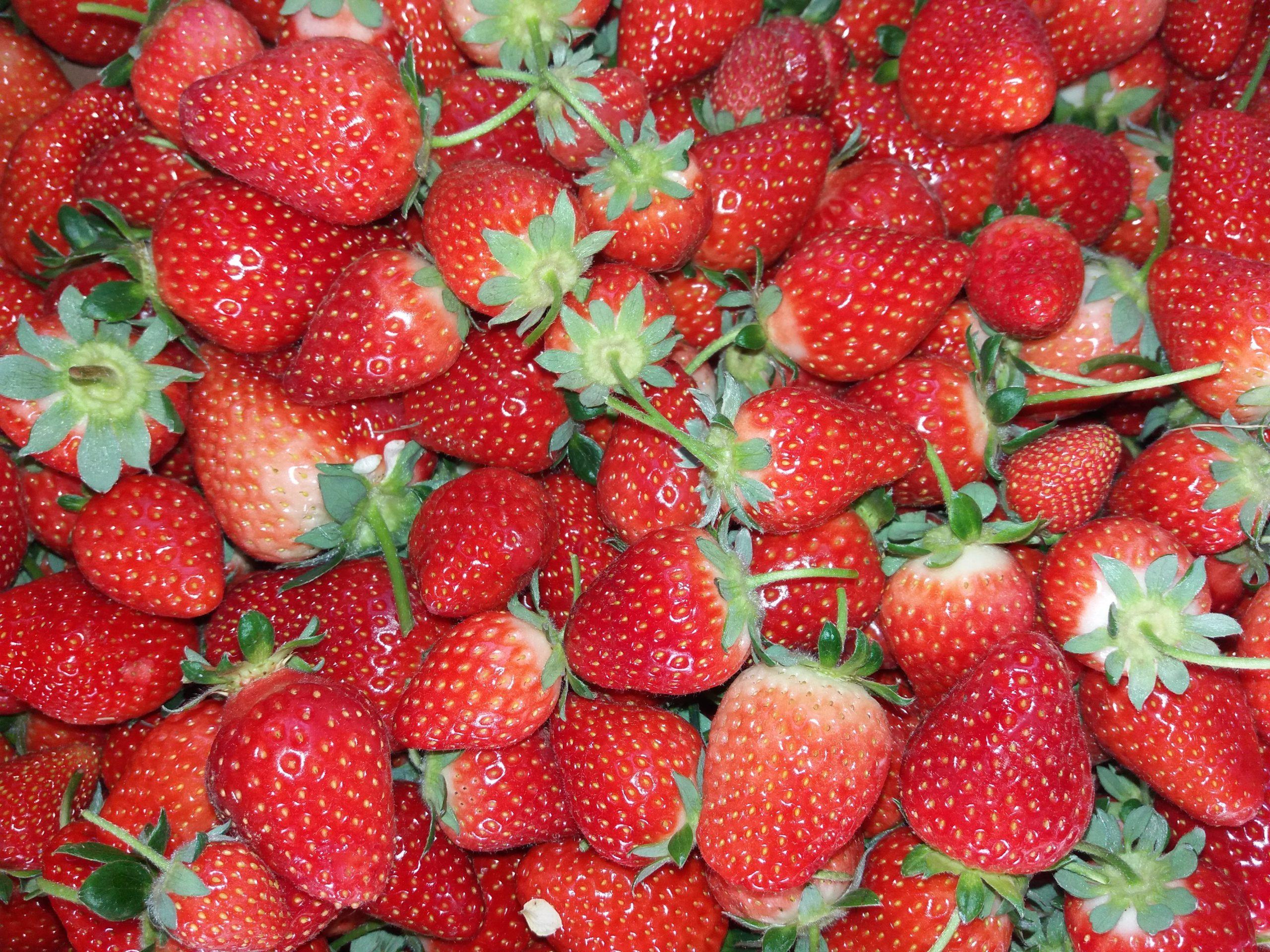 Le fragole piacciono a tutti (o quasi) e molti in questa stagione le coltivano nell'orto. Scopriamo insieme quali sono le principali patologie della fragola e alcune accortezze per prevenirle.