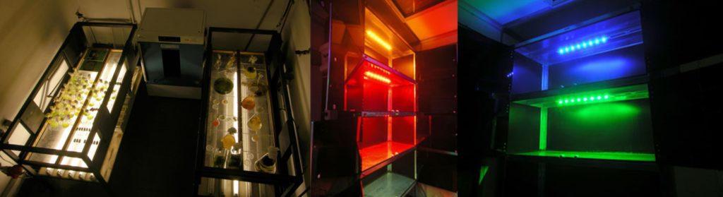 Fotografie di alcuni laboratori di ricerca e sviluppo della ceppoteca ACUF di Napoli.