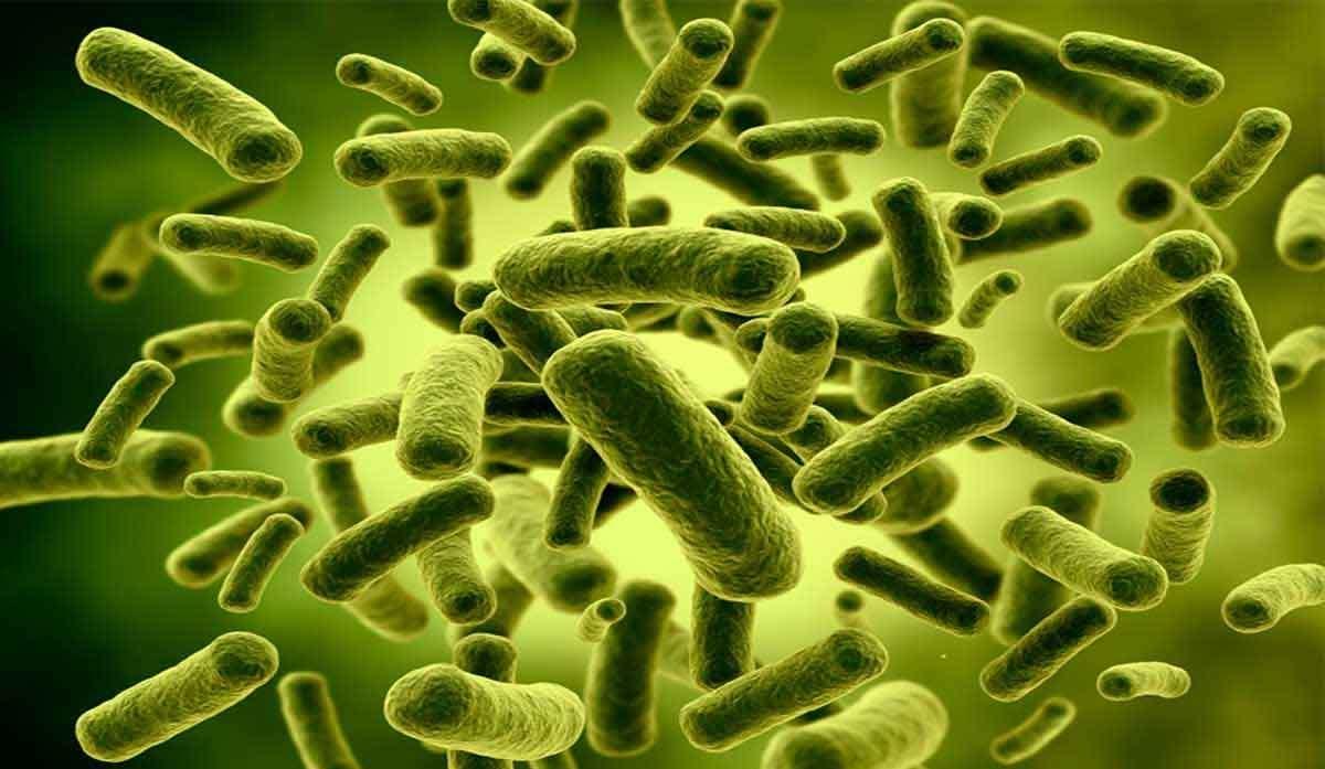 Probiotici e microbiota intestinale