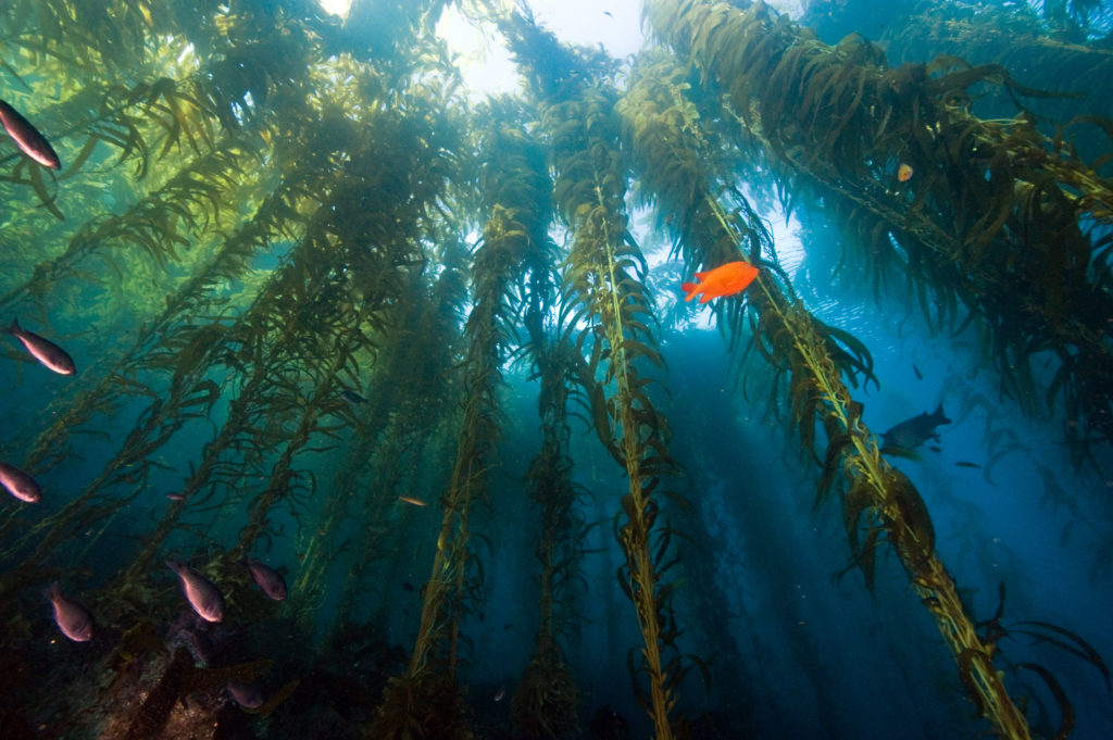 Figura 1 - Le alghe