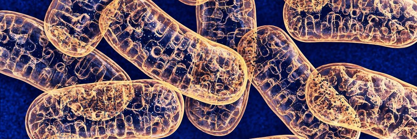 Immagine raffigurante diversi mitocondri