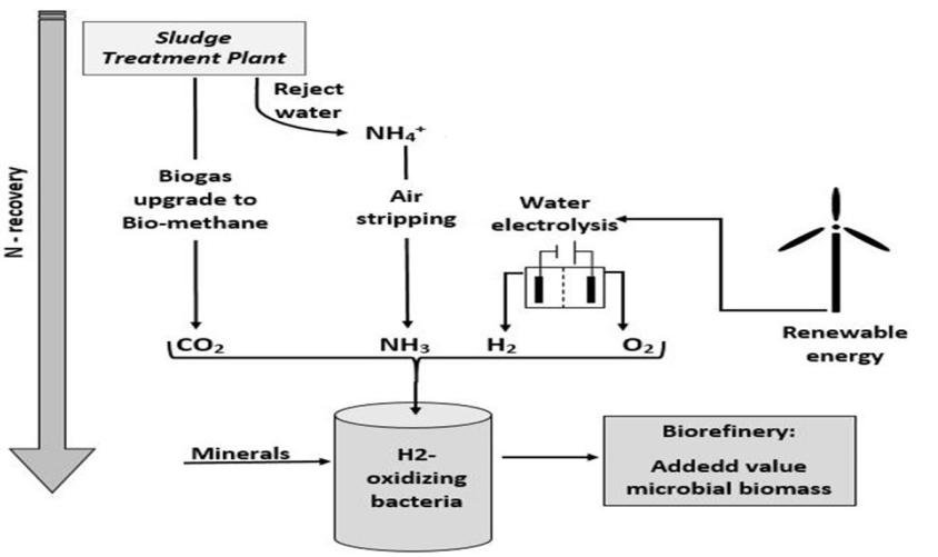 La figura seguente illustra in dettaglio il processo per la produzione di proteine mediante la tecnologia power-to protein