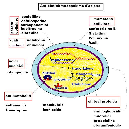Principali meccanismi d'azione degli antibiotici