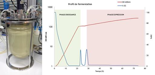 fermentazione di P. pastoris in bioreattore