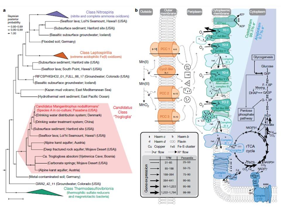 albero filogenetico delle nuove specie identificate
