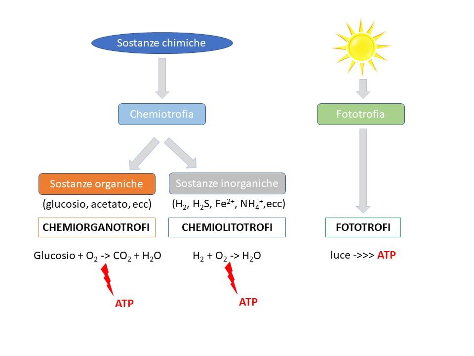Differenze tra chemiotrofi e fototrofi