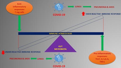 Azione modulatoria del microbiota intestinale sulla risposta immunitaria.