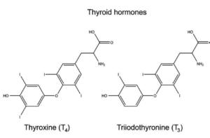 I due ormoni prodotti dalla tiroide: T3 e T4 considerati, rispettivamente la forma attiva ed il precursore.