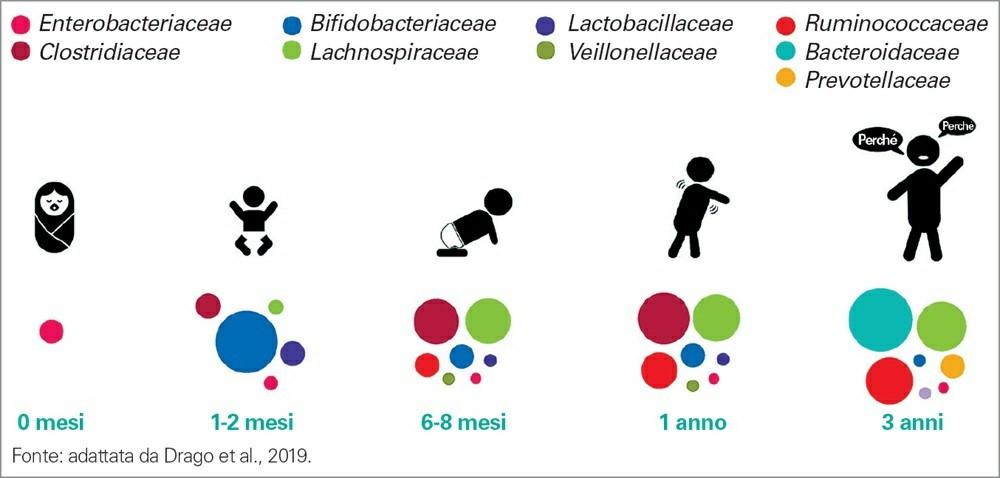 La composizione del microbiota infantile comporta una serie di modifiche nei primi 3 anni di vita