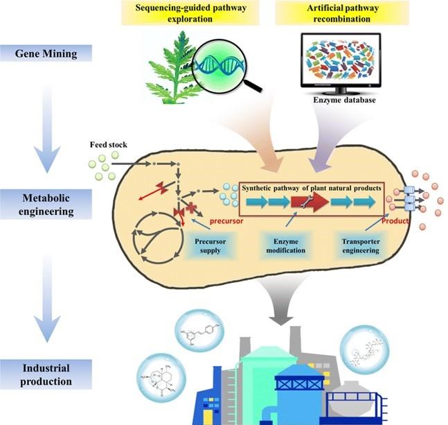 Bacillus subtilis cell factory