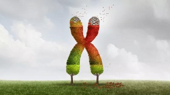 telomeri e telomerasi
