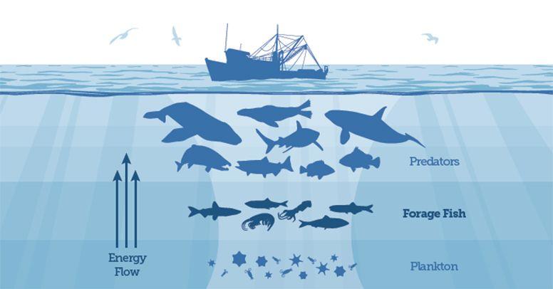 Ruolo dei virus nella rete trofica marina