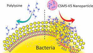 Peptide sintetico antimicrobico CSM5-K5