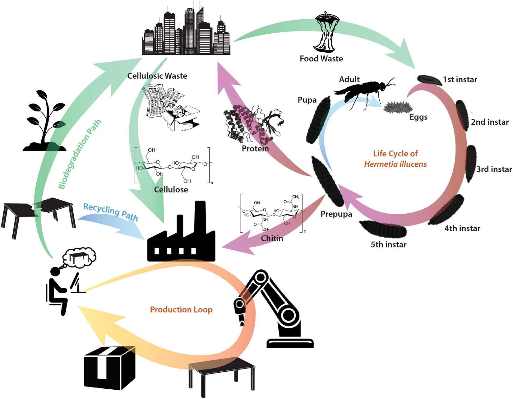 Schema di economia circolare del cibo