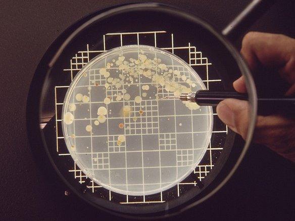 conta microbica