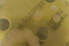 Pseudomonas aeruginosa 2